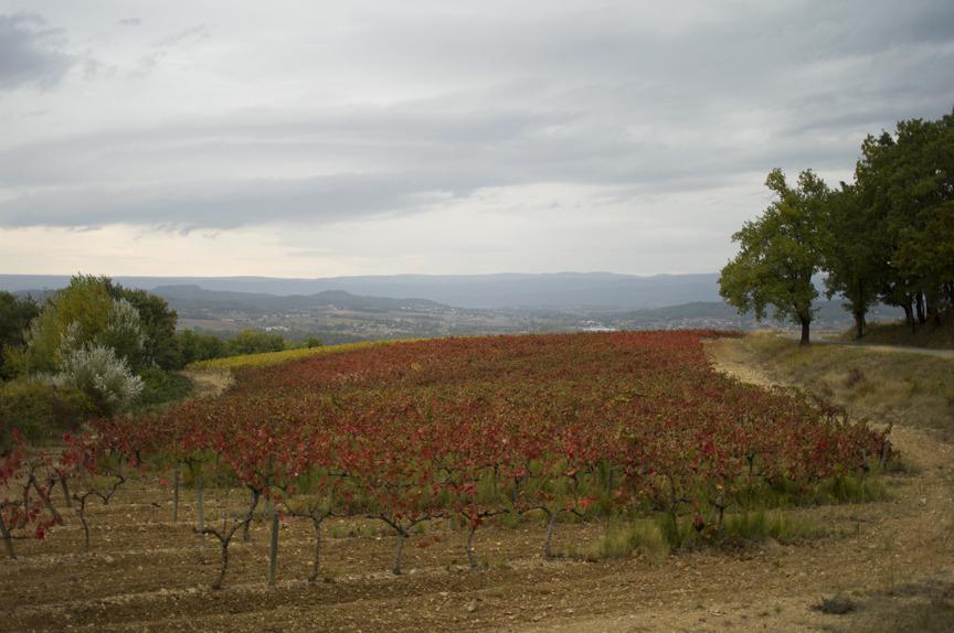 Provence by JM.jpg