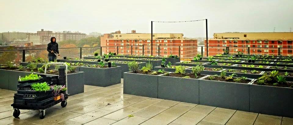 Atlantic Plumbing, Rooftop Community Garden, 8th & Vst,NW DC