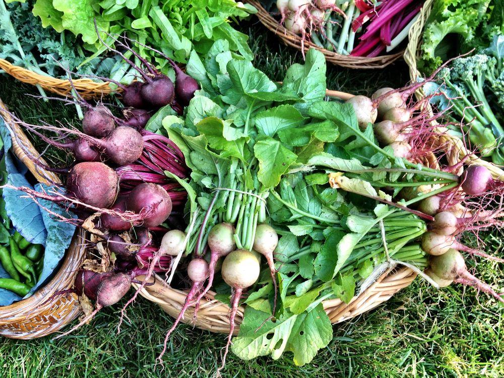 Harvest_Beets&Radish-Baskets.jpg