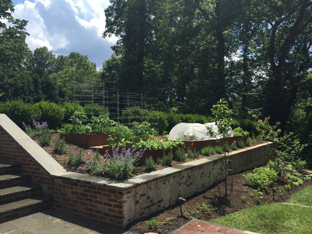 Raised Beds_Webb_2.jpg