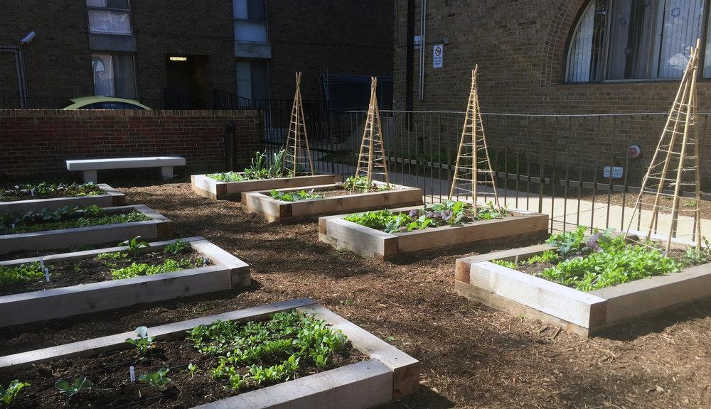 Community Gardens_Channel Square_2.jpg