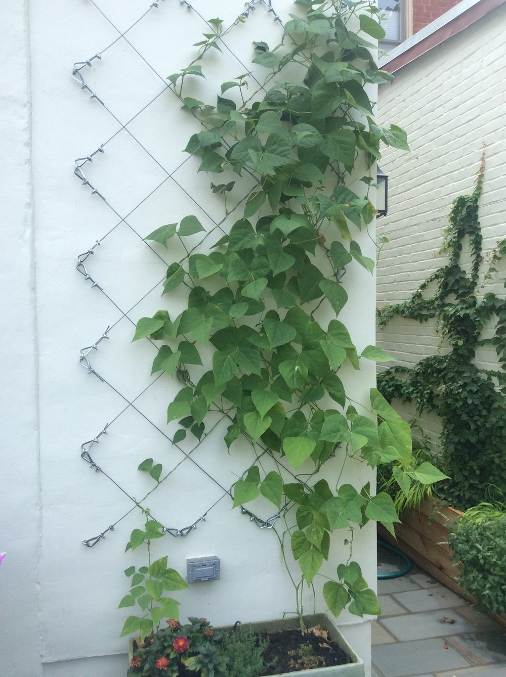 Wall Mounted Wire Trellising