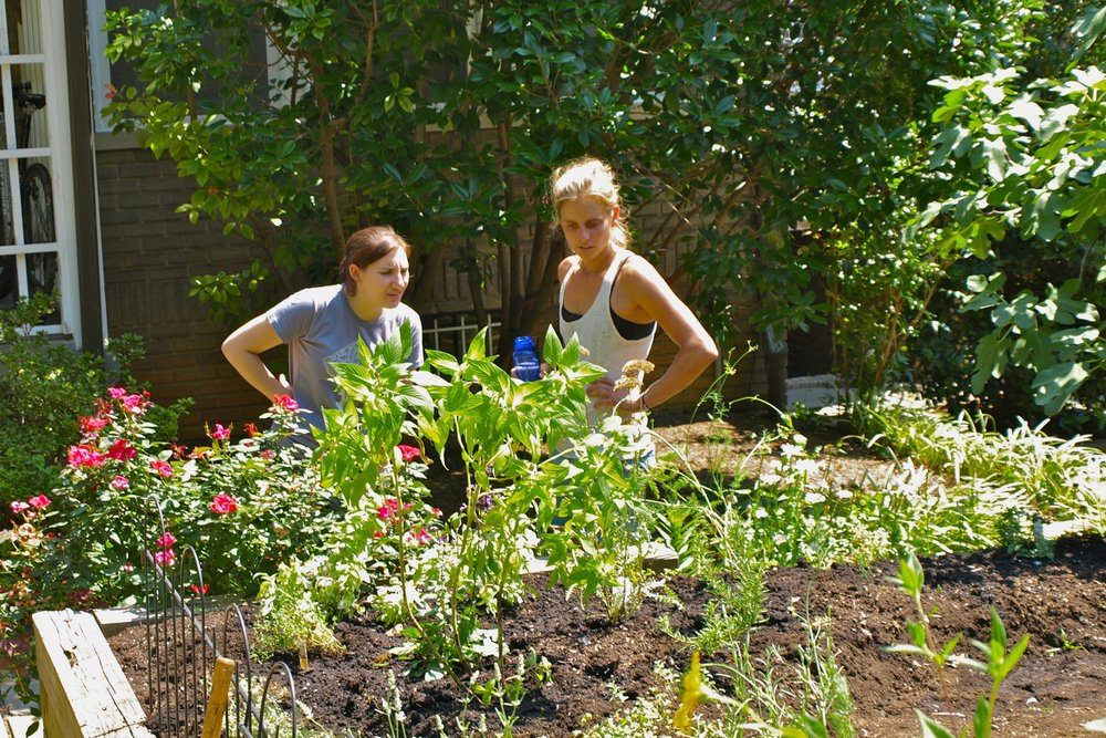 1. CONSULTATION  - Every new garden starts with an initial site visit and consultation. Our garden expert meets with you at your home to discuss your goals, past gardening experience, and vision for your future garden. We collect all the information we need to create the proposal and estimate for your garden.