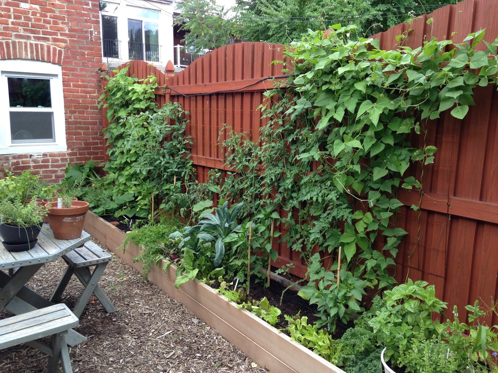 Narrow Raised Beds