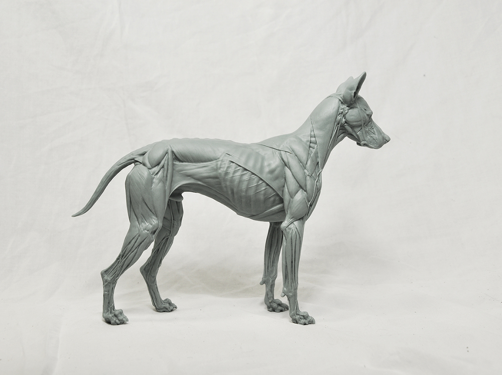 ANIMAL COLLECTION — s lord art