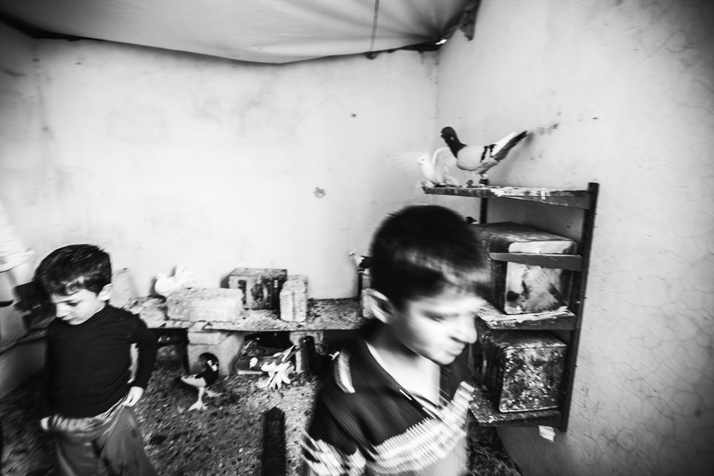 Syrian boys in their pigeon house. Tall Rifat, Syria. 2012   ©    Go Nakamura     photography