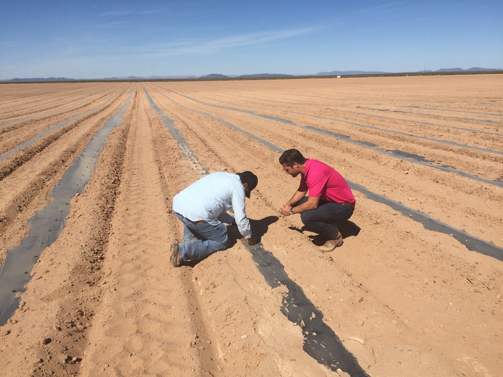Micro Bead Technology - Using technology similar to diapers, biodegradable beads are installed in the land to create better use of water resources.Results: Higher yield and less waterProgram Determination: Success