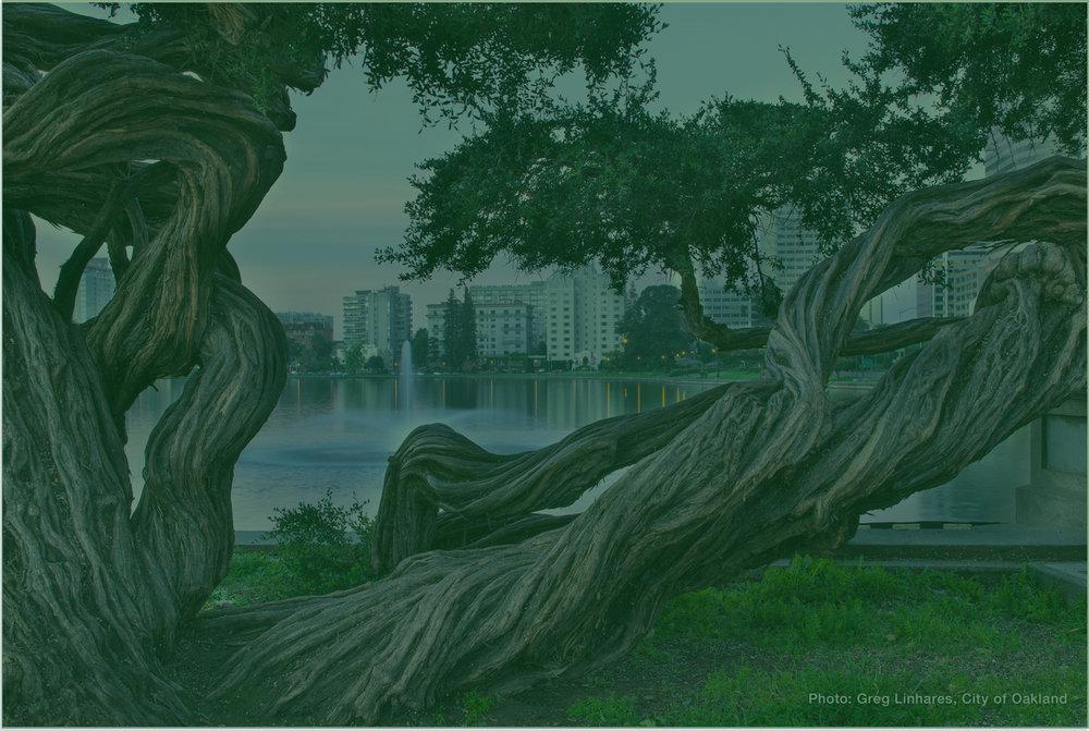 treegradient 4.jpg