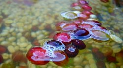 1411_Floaters_2.JPG