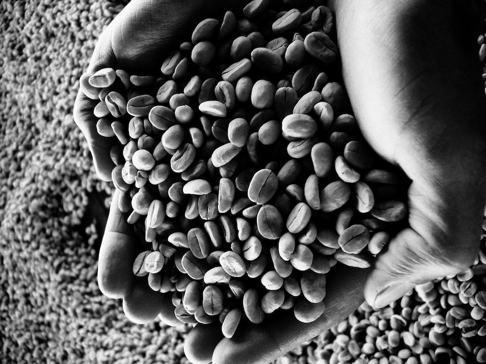 Sementes de Café - Cerejas Descascadas
