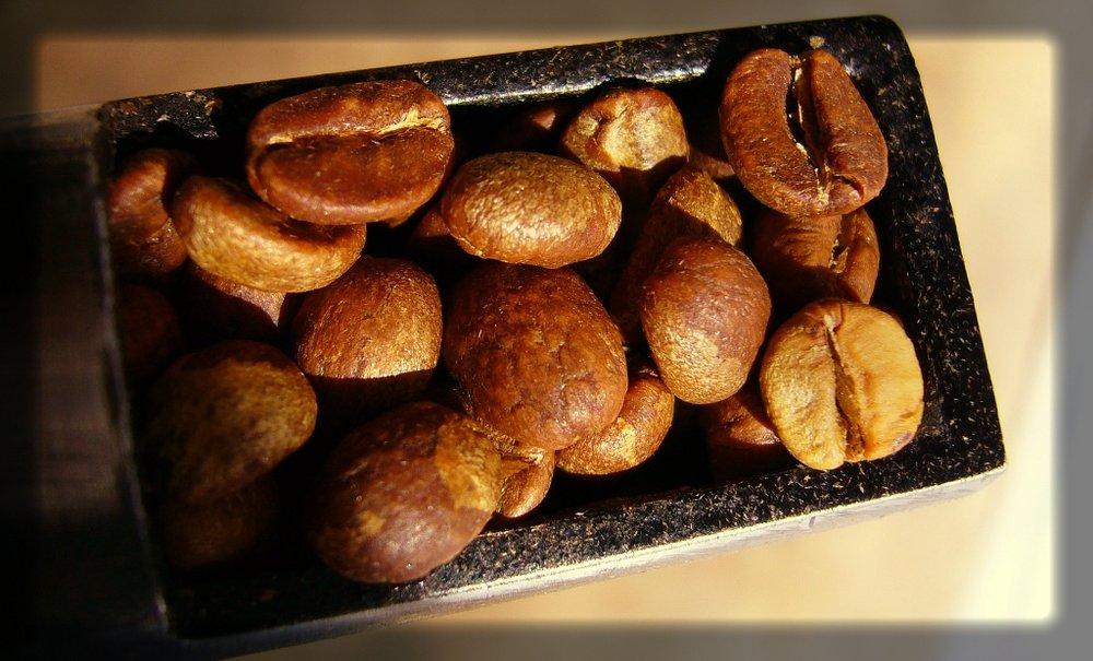 Sementes de café em processo de expansão durante a torra.