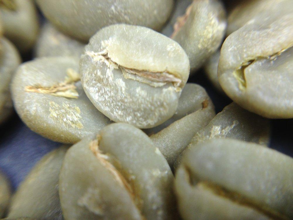 Sementes cruas de café