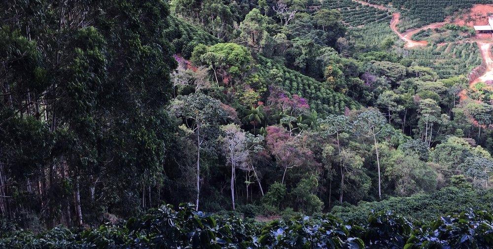 Fazenda Marapé, Brejetuba, ES