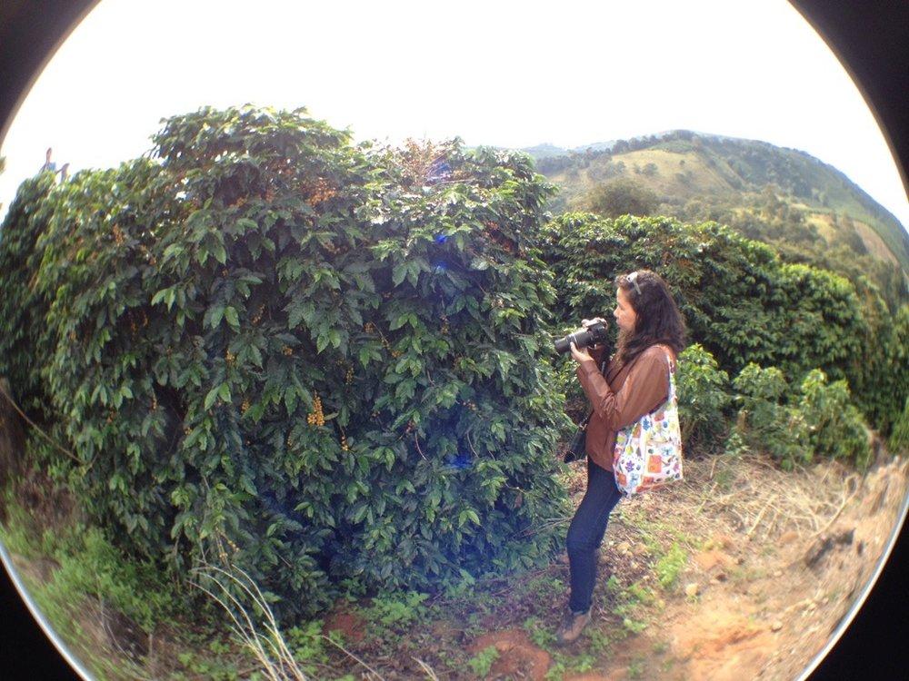 Documentando lavouras