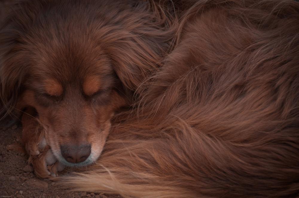dogCurledUp.jpg