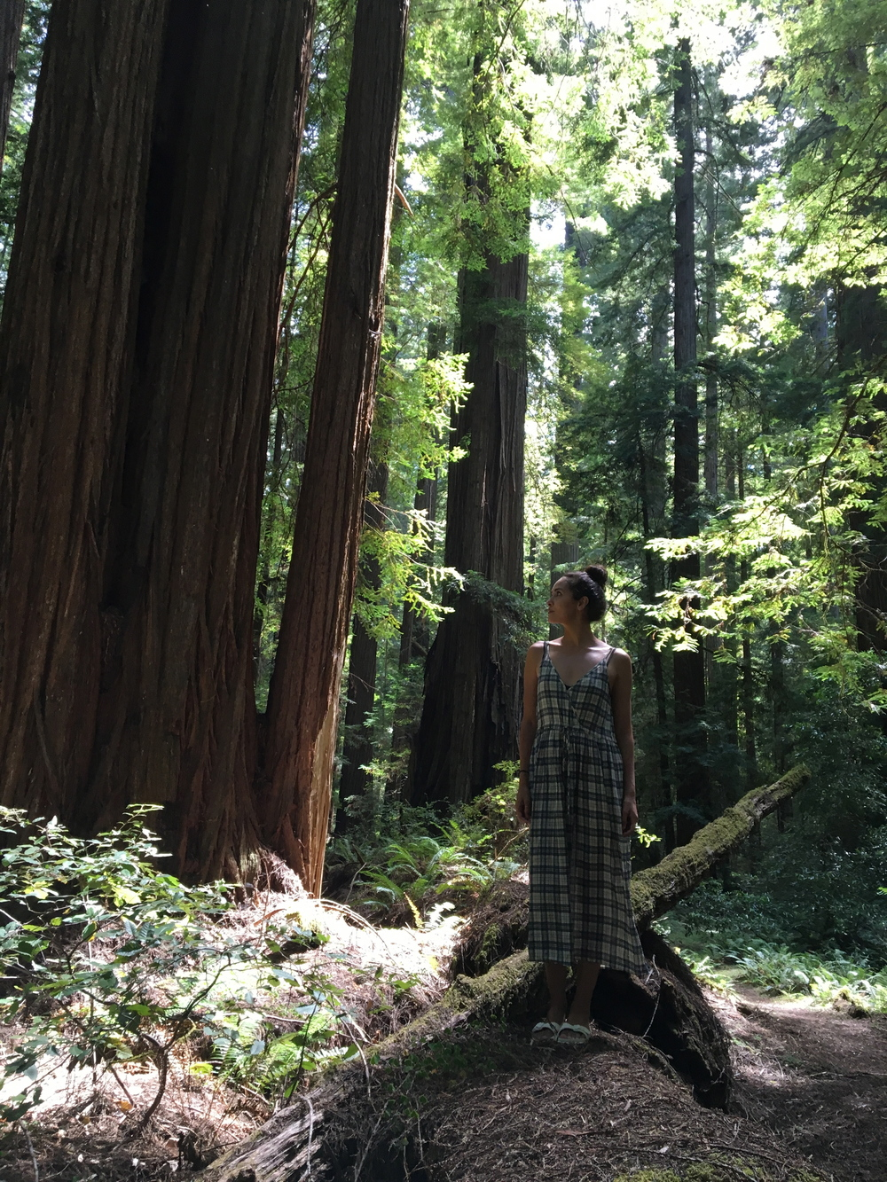 The Rockefeller Forest, Humboldt county + the Lincoln dress by Christy Dawn.