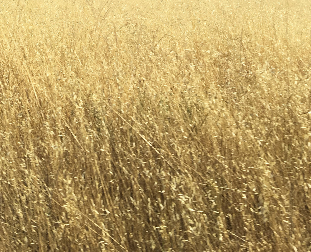 crop36.jpg
