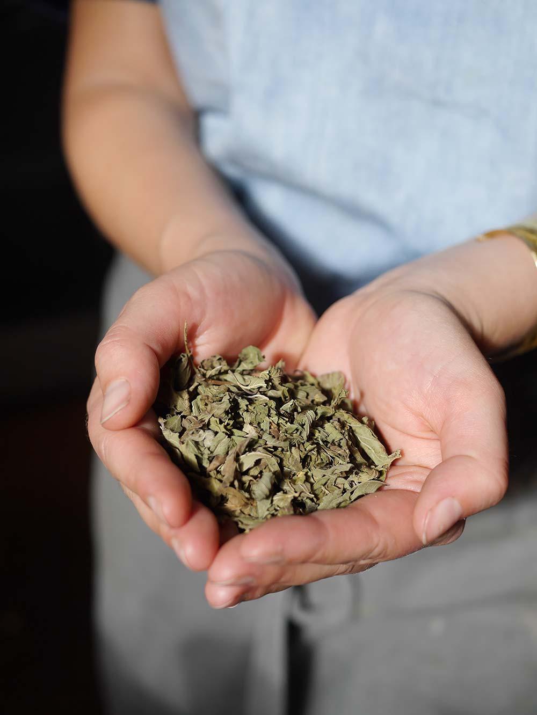 Herbal-tea-peppermint.jpg