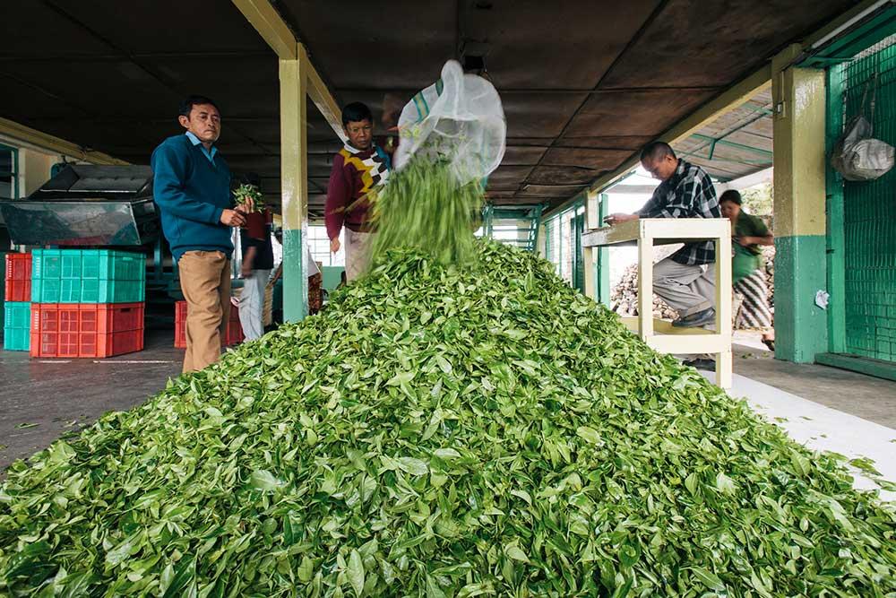 Darjeeling-caffeine-image-web-ready-3.jpg