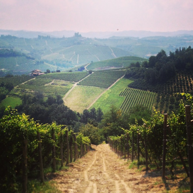 Barolo country.jpg