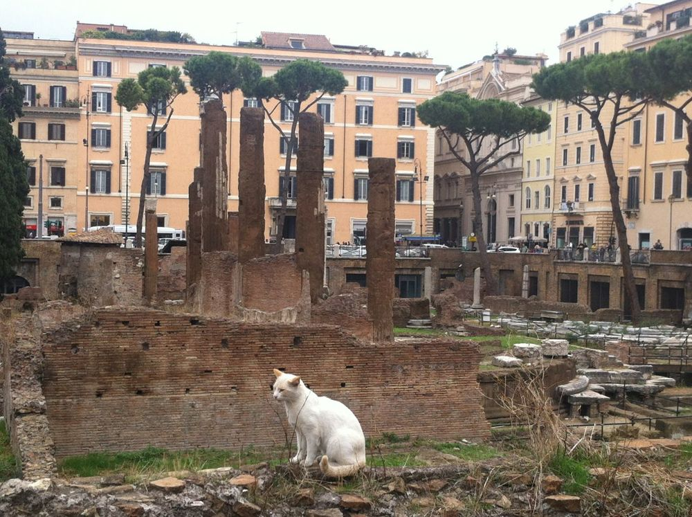torre-argentina-cat-and-ruins-rome3