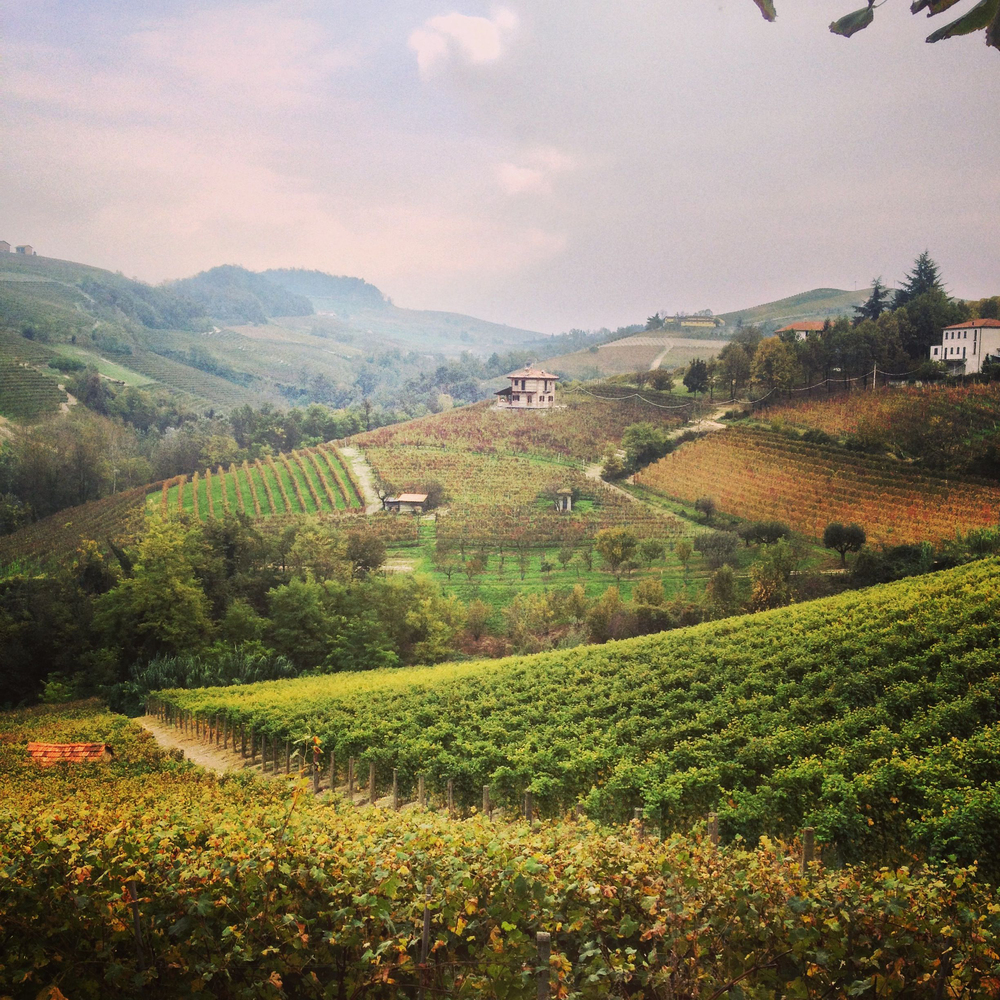 Vineyards of Barolo, Morso Travel food and wine tours of Italy.