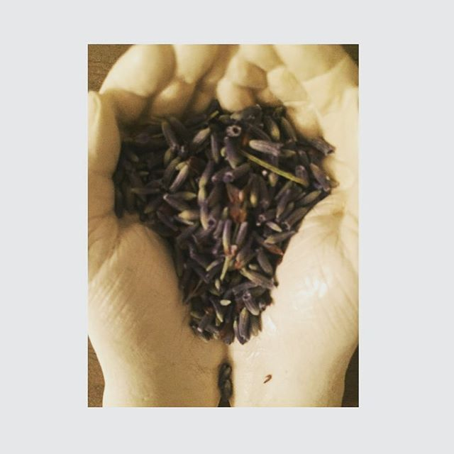less words :: more love :: #love #silence #presence #being #justbe #givelove #beherenow #loving #bodhicitta #mindfulness #spiritual #listen #action #wisewords #dailypic #zen #generosity #meditation #belove #gratitude #abundance #consciousness #lavender #herbs #organic
