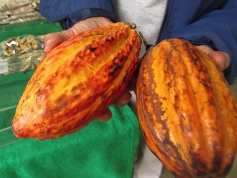 An organic cacao pod at Virgílio's stand