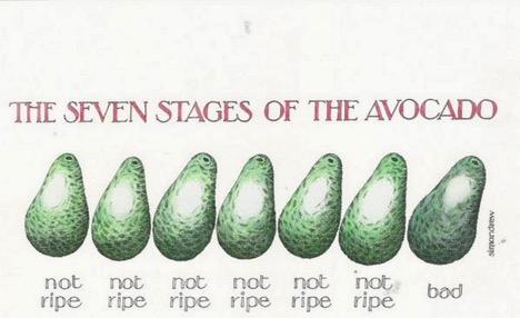 (courtesy of https://awesomeashild.files.wordpress.com/2013/07/avocado3.jpeg)