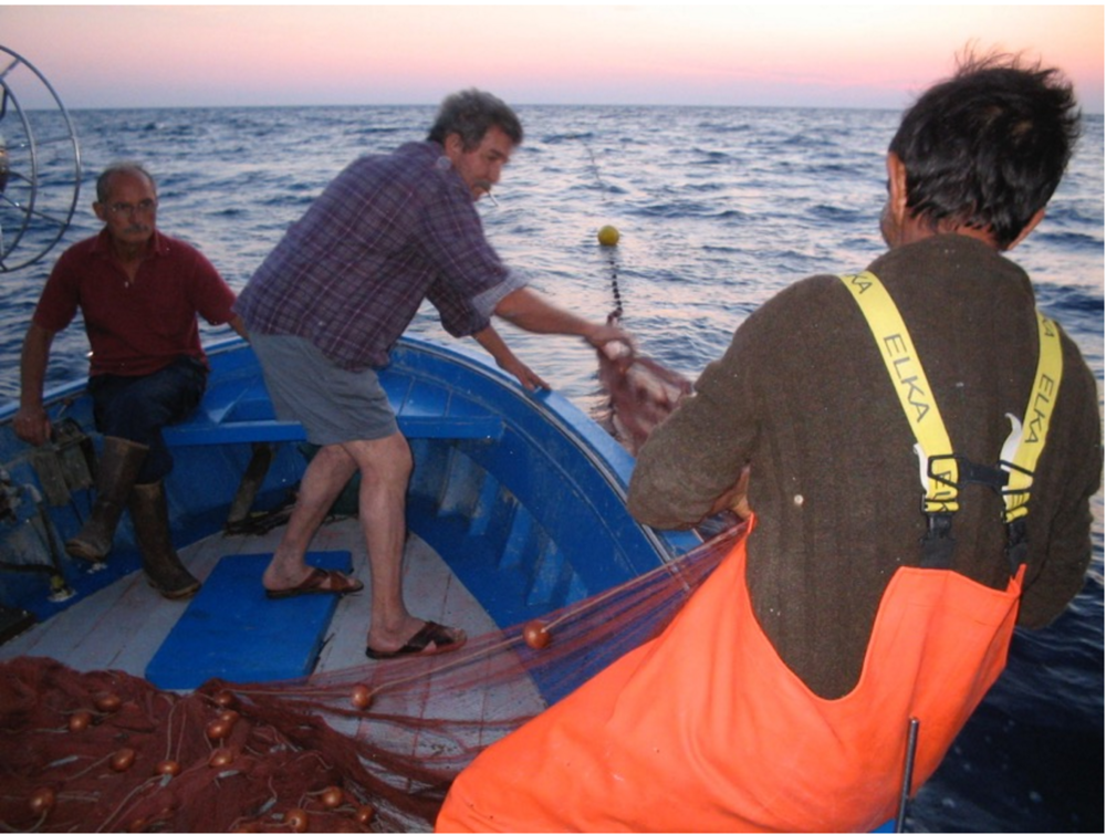 At sunset, Andrea Fariello (center), a Marina di Pisciotta cafe owner by day and fisherman by night, casts his menaica net with the help of friends.