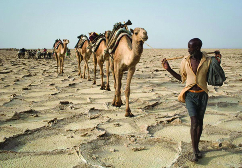 In the lowest point in Africa — the Danakil Depression, which covers parts of Ethiopia, Eritrea and Djibouti — salt extractors travel in camel caravans for days over perilous territory where temperatures are fierce and water is scarce. PHOTO: SIEGFRIED MODOLA/REUTERS