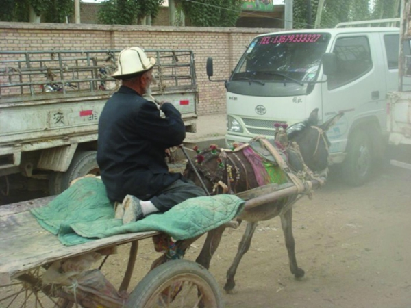The livestock market outside Kashgar, China, sits on the ancient Silk Road. Donkeys and mules are bought and sold to transport other animals purchased for meat. The sure-footed animals can deliver food where no trucks or cars can pass. PHOTO: ROBYN METCALFE