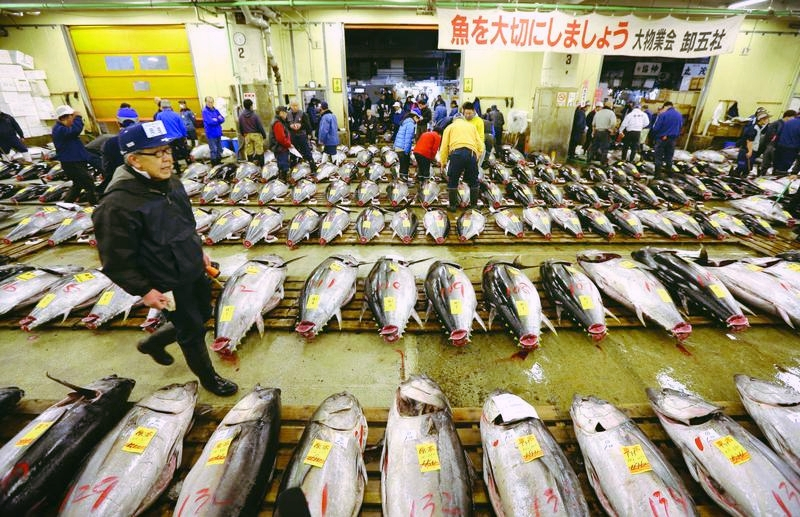 Buyers inspecting the day's catch of fresh tuna before the auction begins. PHOTO:PHOTO COURTESY KYODO NEWS