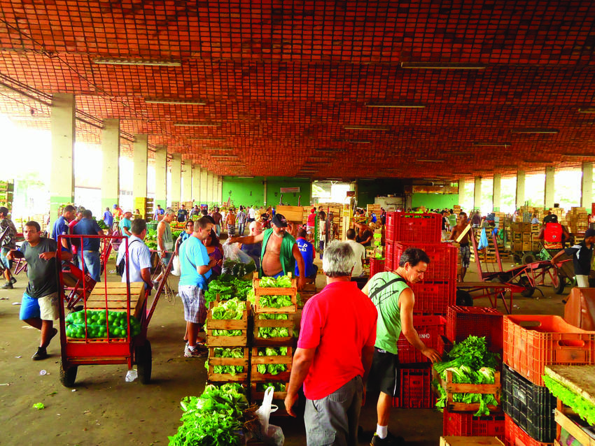 One of the largest food markets in all of Latin America, Ceasa covers 7.5 million square feet. Famous for its flower and plant markets, Ceasa serves citizens as well as restaurants and other businesses in Rio. PHOTO: LUIZ BARROS