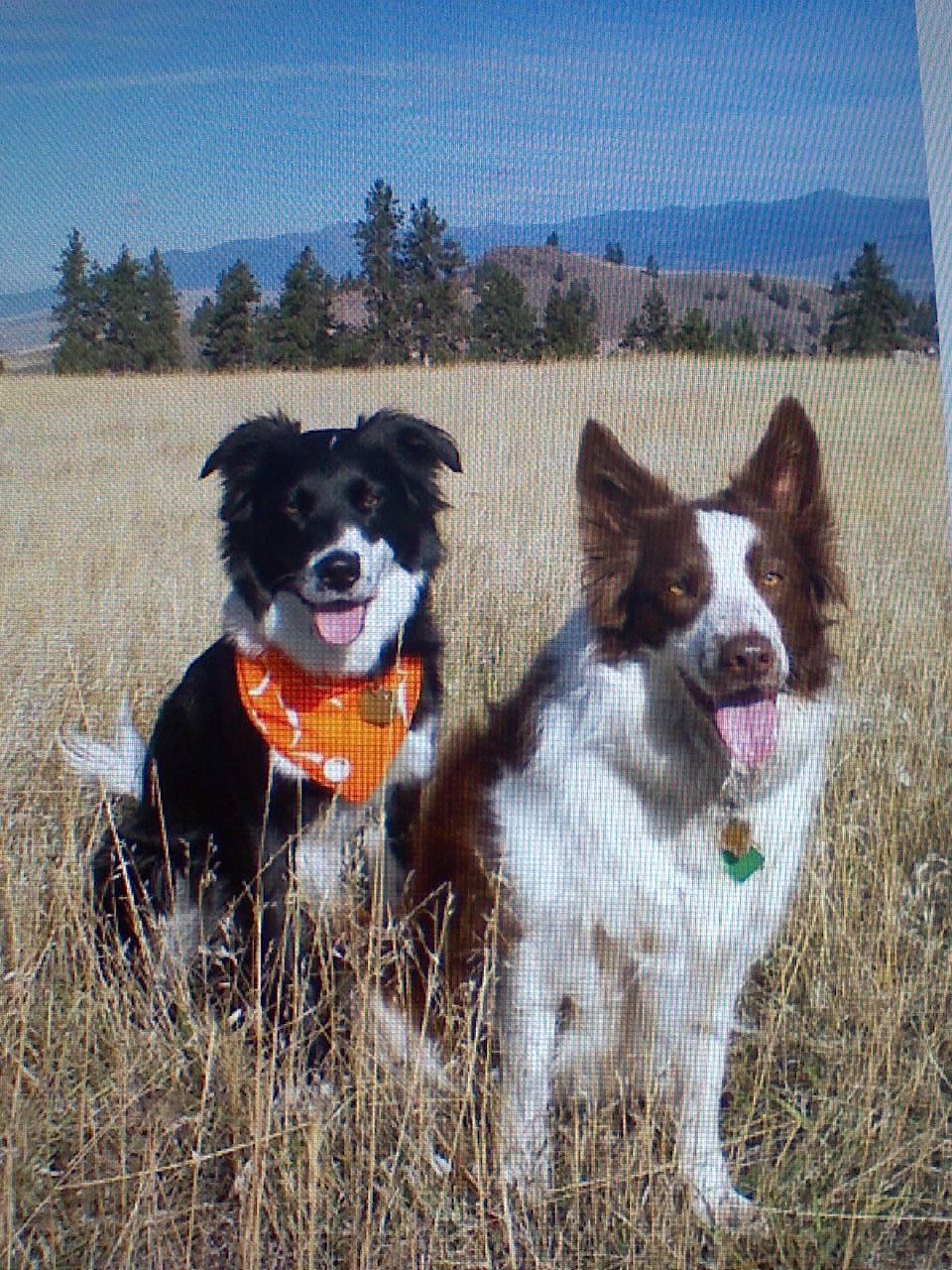 Dog Day Care Newton Ma