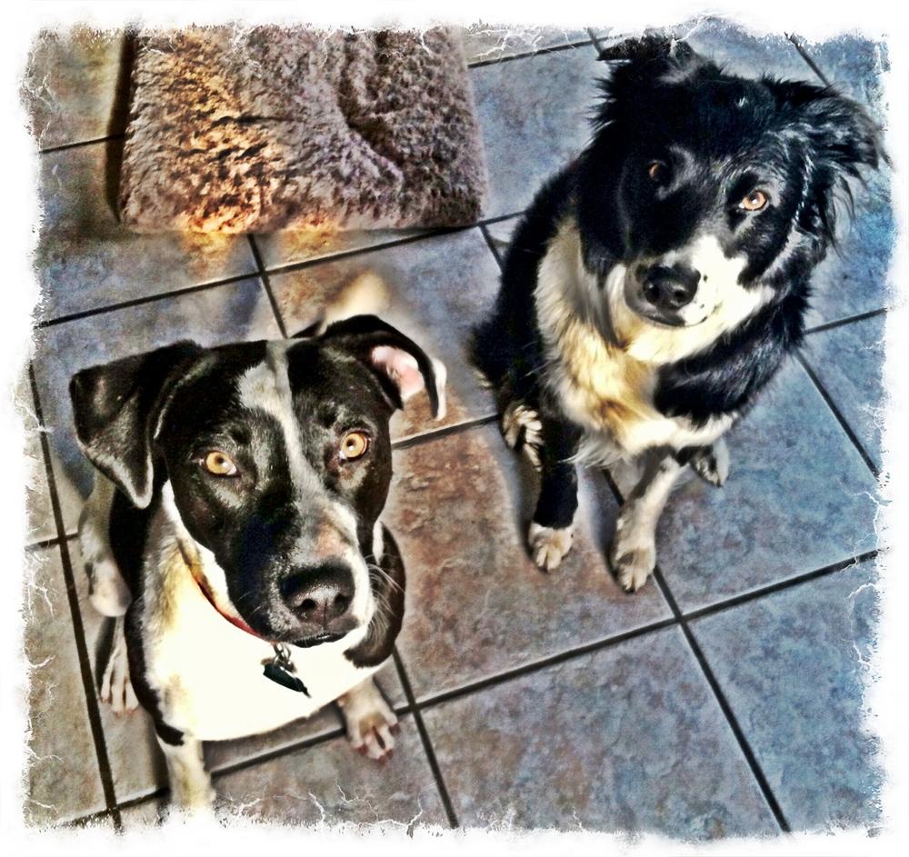 Bella and Buddy.JPG