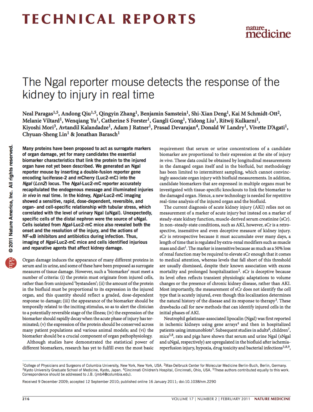 The Ngal reporter mouse detects the response of the kidney to injury in real time