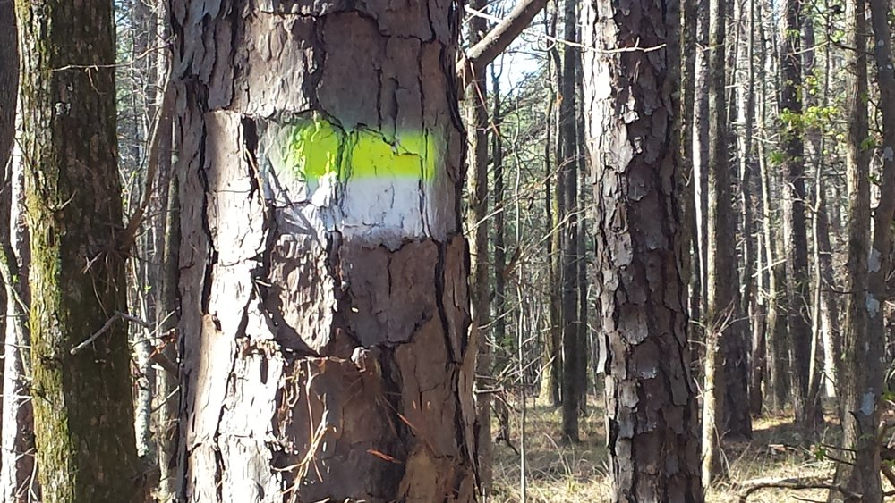 Color-coded trail blazes on the trees