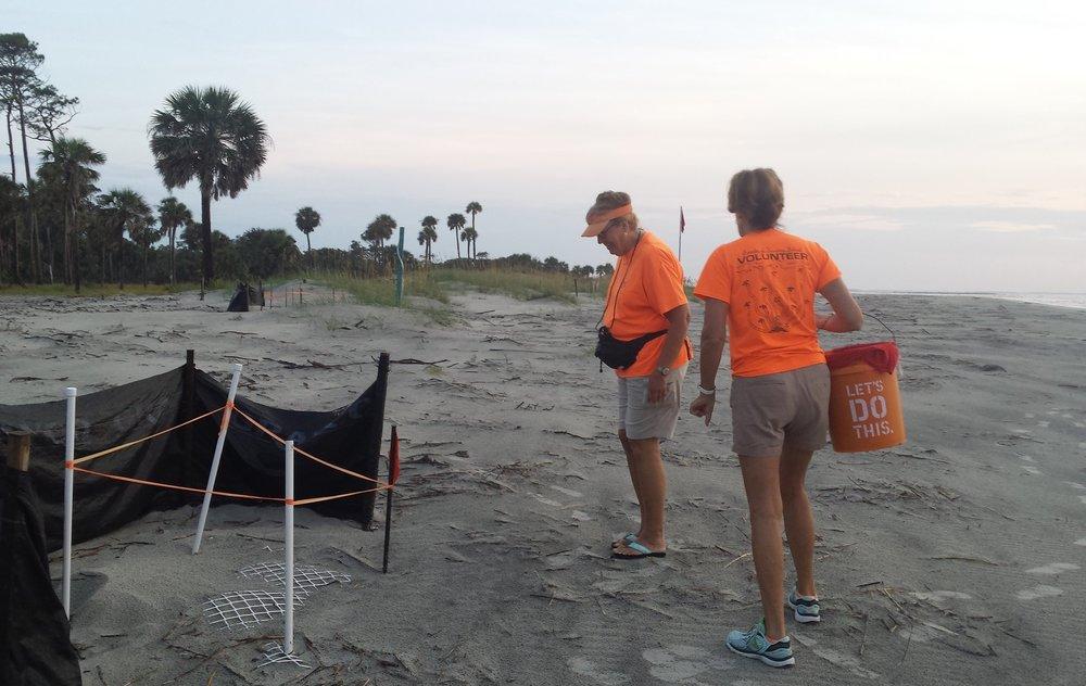 Checking the turtle nests on Hunting Island, South Carolina