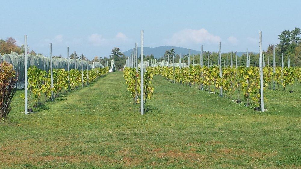 netting-over-vines.jpg