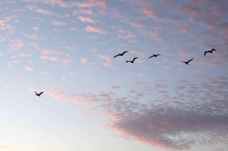 birds1.png