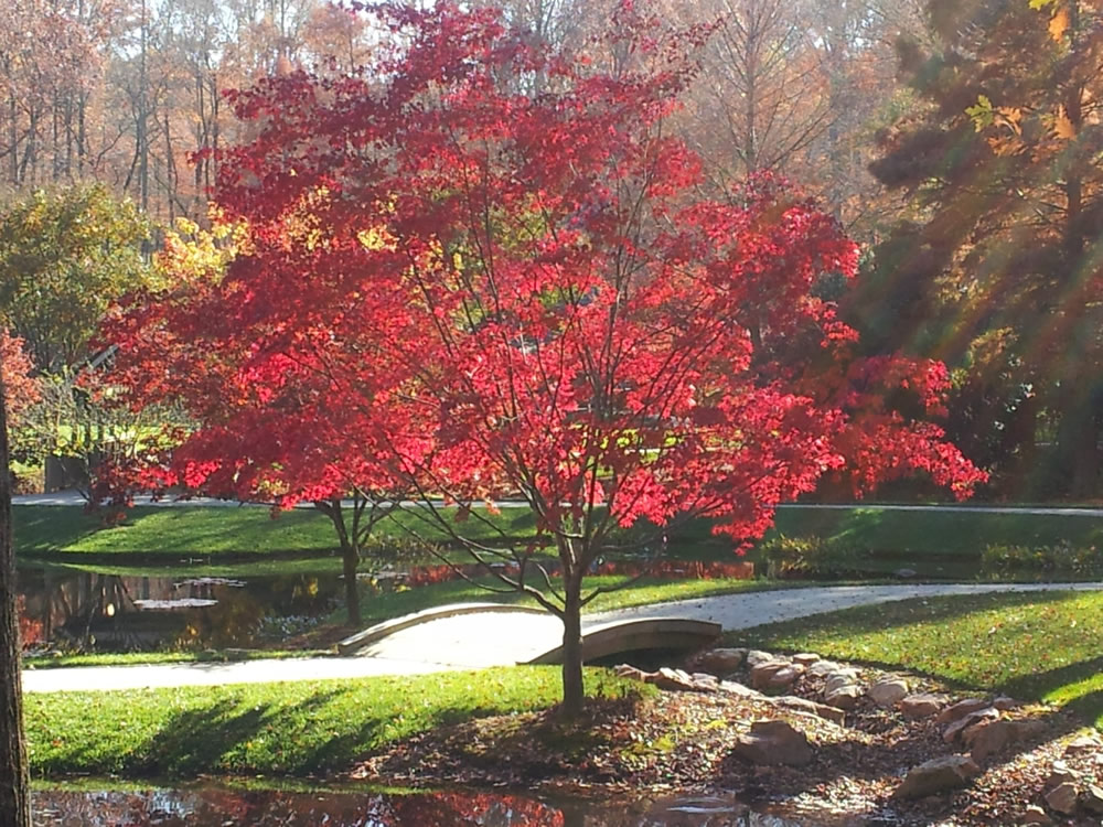 Fall splendor at Gibbs Gardens
