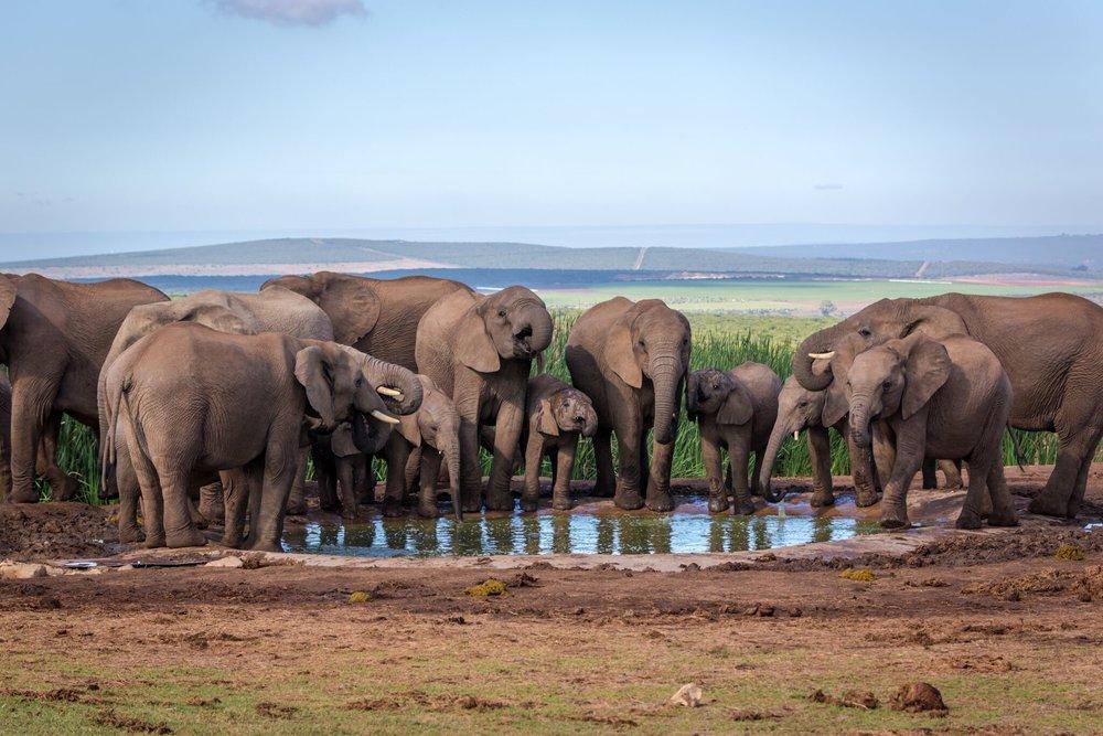 Südafrika-Elefanten.jpg