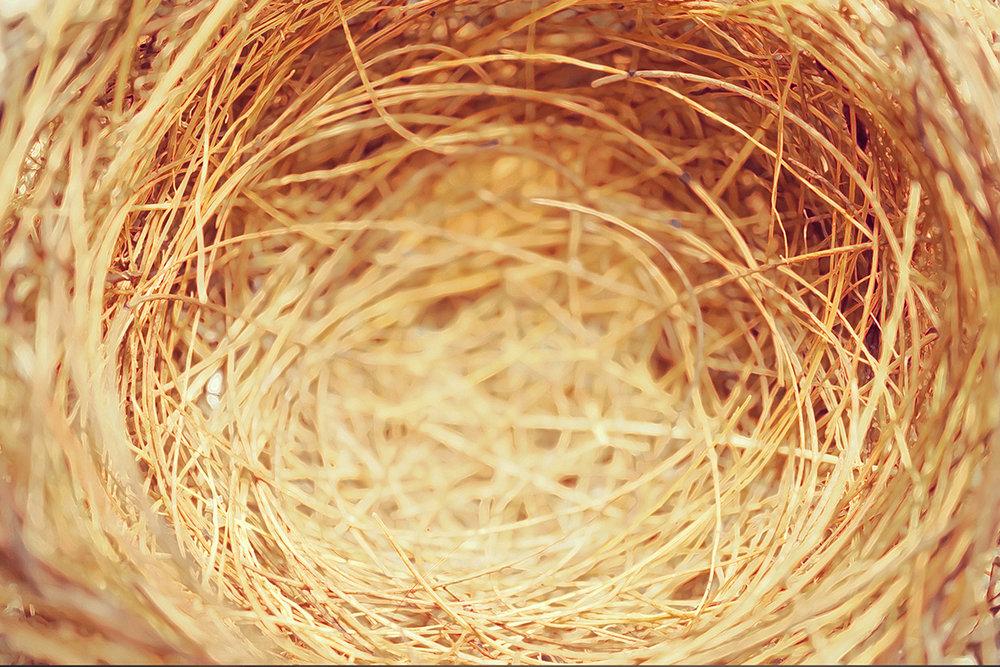 BIRDS-OF-A-FEATHER-FLOOR-TC.jpg