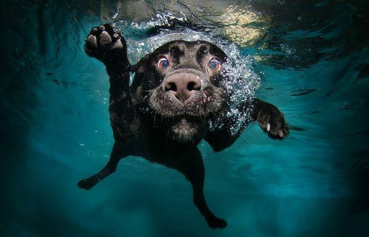 La meilleure photo de la journée. #chien #plongeon
