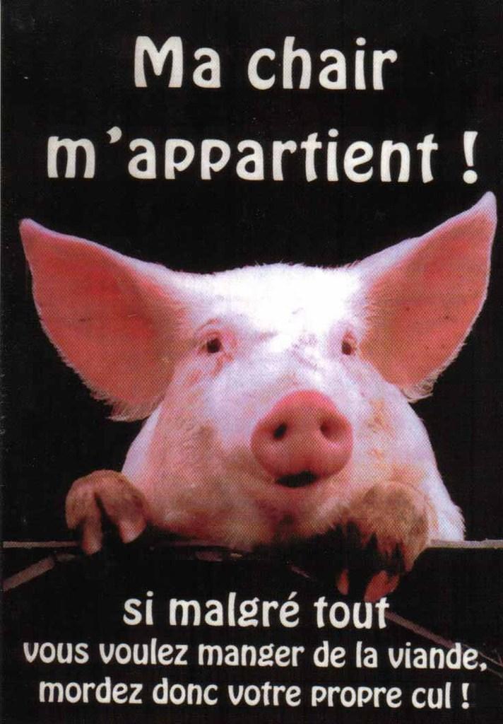 Manger de la viande ou non ? Tout comprendre en une photo. #humour