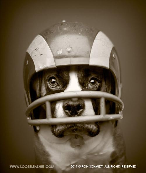 Le chien le plus cool du monde. Encore plus cool que le votre. Sauf si vous arrivez à lui faire porter ce casque et qu'il vous regarde comme ça.