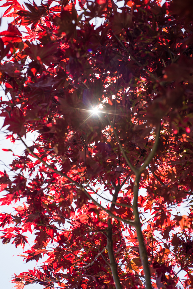 Under the cover of a Japanese Maple canopy.