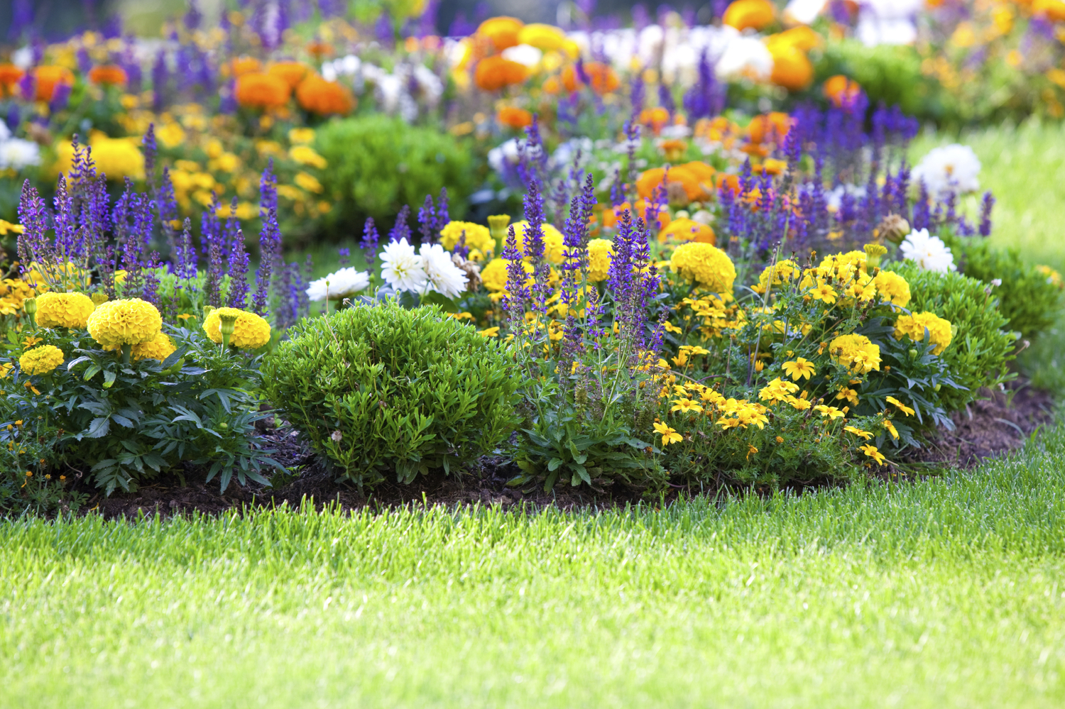 Annuals Vs Perennials And The Beauty Of The Mixed Border New Leaf