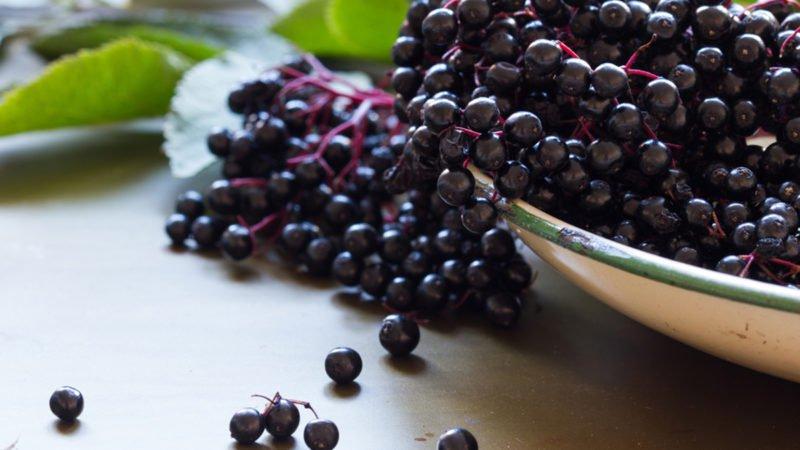 Elderberries-800x450.jpg